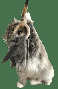Mojo qui s'amuse avec un Toodoo accroché à une canapêche. Ces deux jouets pour partie des joojoo de la marque d'accessoires pour chats Nominoo