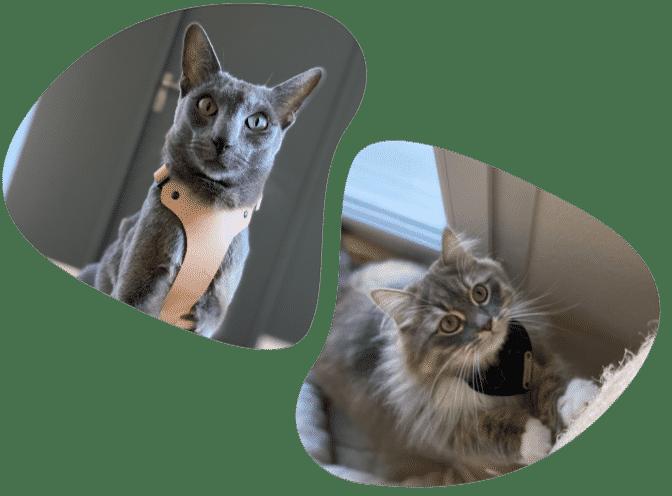 Loki et Mojo de la team Nominoo